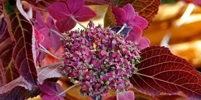 Le più belle fioriture di ottobre in giardino