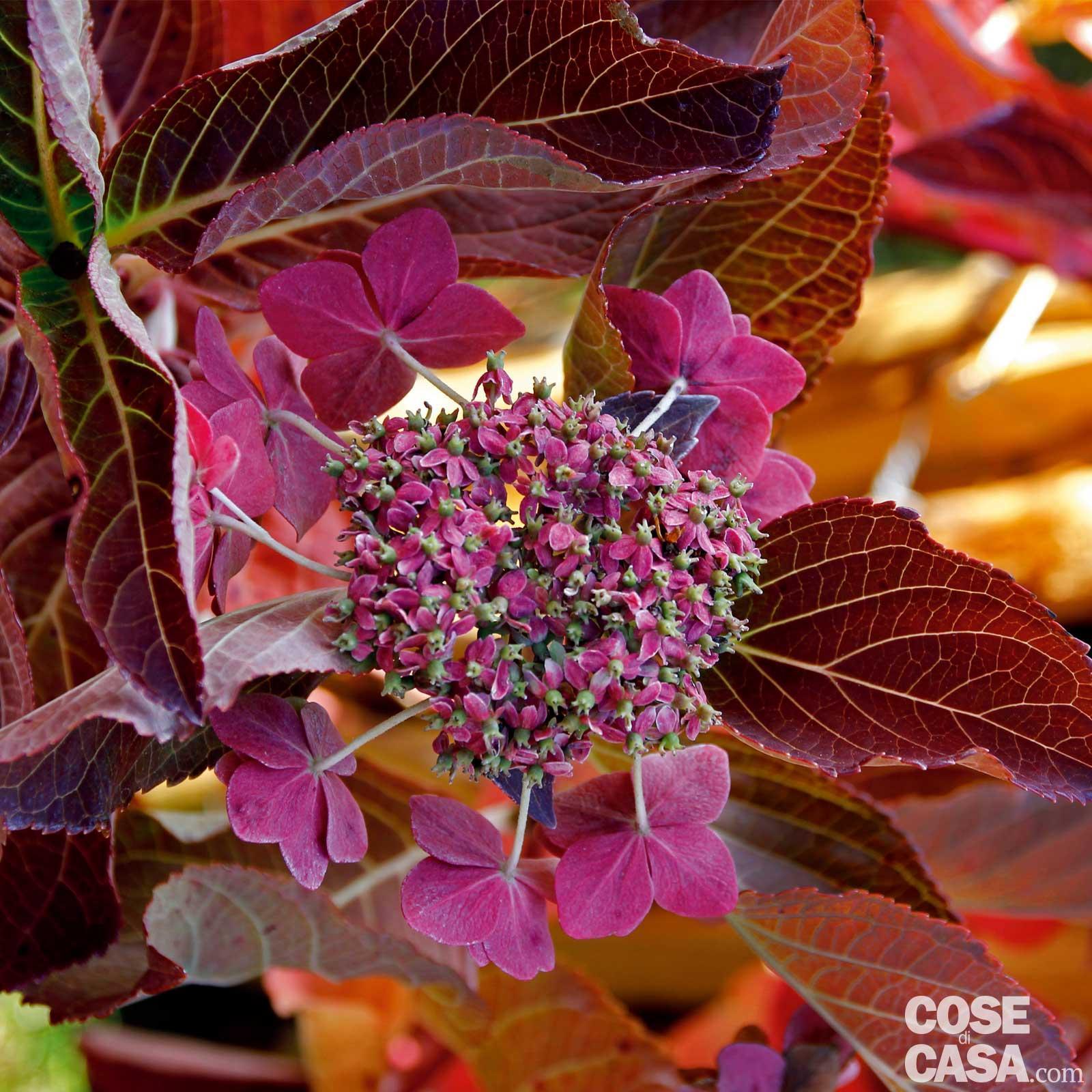 Piante Da Giardino Ombroso le più belle fioriture di ottobre in giardino - cose di casa