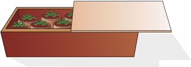 Preparare vasetti della dimensione di circa 10 cm di circonferenza riempiti con torba e sabbia in parti uguali. Inserire tre semi di pisello odoroso in ogni vasetto alla profondità di 0,5 cm. Posizionare i vasi gli uni vicino agli altri in una zona riparata o in un cassone che possa essere coperto, in modo da poterli proteggere dalla forte pioggia o dal sole, se vi è bisogno, soprattutto nel primo periodo di germinazione e della nascita delle piantine. Invece, non sarà necessario riparare le piante dal freddo, perché le piante resistono bene.