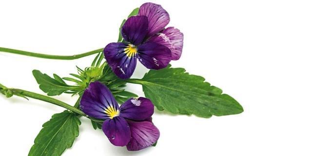 Sul terrazzo, due fioriere colorate che durano a lungo