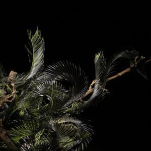 "Legno e foglie di palma per questo ""paesaggio"" ikebana di Xu Fei"