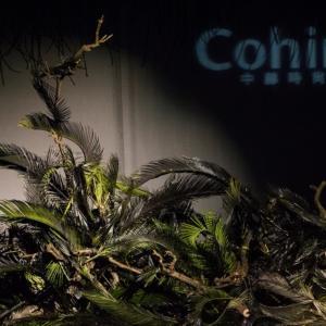 Le composizioni ikebana ispirate alla natura con foglie e legno
