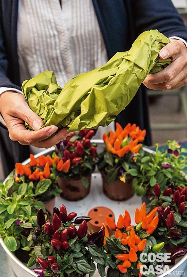 2. Poi inserire i vasetti di peperoncini, alternando i colori, lungo il perimetro interno della teglia; in posizione opposta, aggiungere i due vasetti di violette: noi abbiamo scelto quelle a fiore piccolo di colore viola e arancione, per riprendere le tonalità della composizione. Quindi porre al centro il vasetto di plastica vuoto; deve essere messo all'ingiù perché servirà solo come supporto per l'elemento centrale, la zucca. Quindi si modella il foglio di carta velina verde.