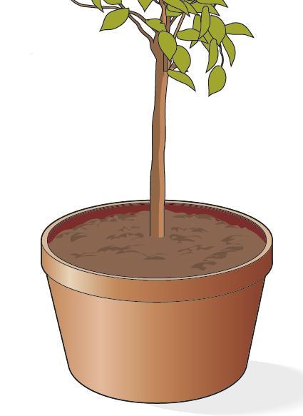 3. Lasciare tra il bordo del vaso e il terriccio uno spazio di 3-4 cm per permettere annaffiature corrette. Annaffiare abbondantemente gli agrumi in vaso.