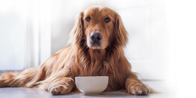 Cibo per il cane: tutto quel che c'è da sapere