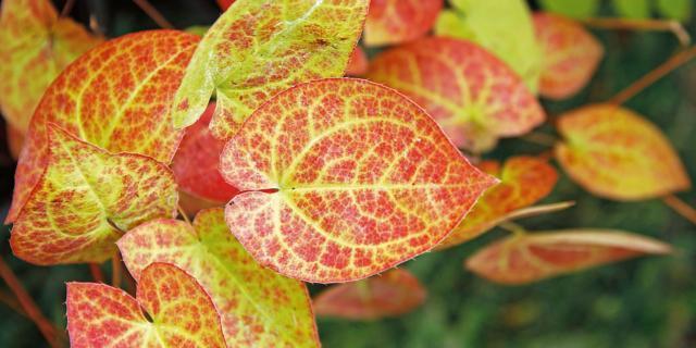 Il foliage sul balcone è possibile con le piante giuste