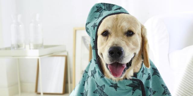 Idee regalo per gli animali di casa