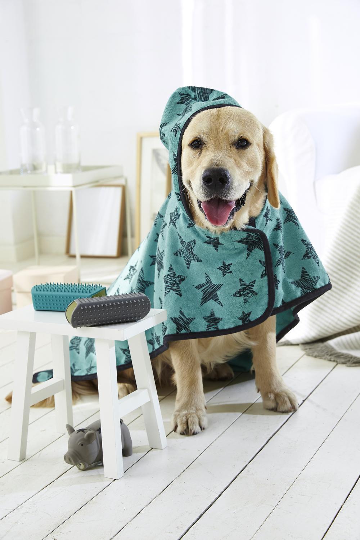 Idee Cucce Per Cani idee regalo per gli animali di casa - cose di casa