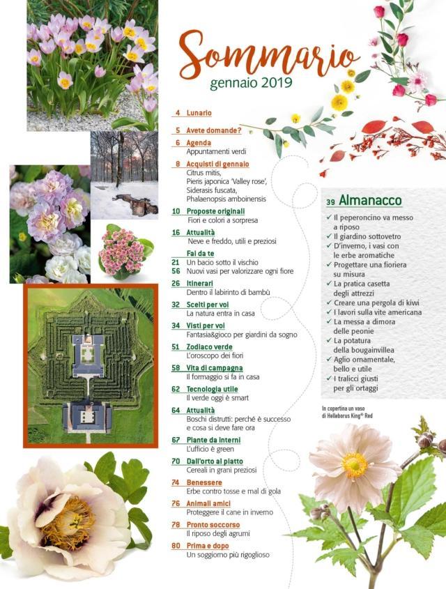 sommario-cif1-2019
