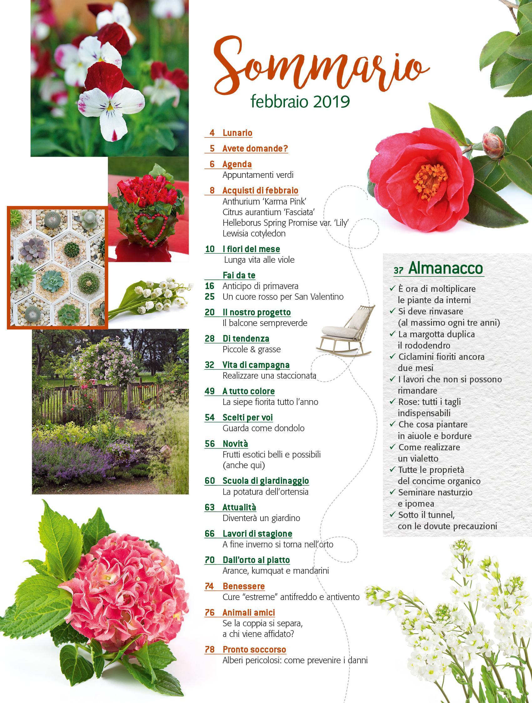 Cosa Piantare A Febbraio in edicola dal 25 gennaio, casa in fiore di febbraio 2019