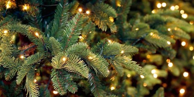 Conservare l'albero di Natale fino al prossimo anno