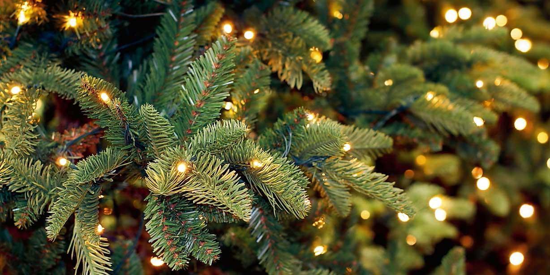 Albero Di Natale Trackidsp 006.Conservare L Albero Di Natale Fino Al Prossimo Anno Cose Di Casa