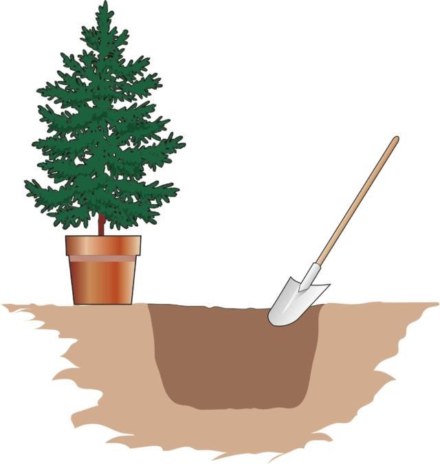 Per conservare l'albero di Natale serve una buca adeguata. Sarà necessario procurarsi una vanga, leggera e maneggevole, che permetta di lavorare con facilità la terra. La buca deve essere larga circa 2 volte il diametro del vaso in cui si trova ora la pianta. Con la vanga si procede, quindi, a segnare sul terreno un cerchio, a immagine della buca. La profondità della buca deve essere circa il doppio dell'altezza del vaso.