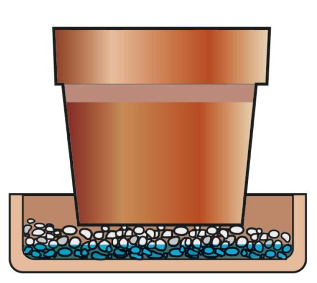 Per evitare problemi con la gardenia fiorita, si mantenga umidità intorno al vaso riempiendo il sottovaso con uno strato di argilla o ghiaia di 2-3 cm che consenta di lasciare una riserva d'acqua costante il cui livello non arrivi a diretto contatto con il vaso stesso.
