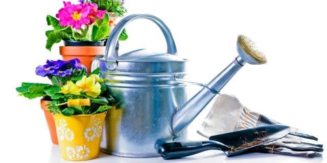Manutenzione delle piante nelle serre domestiche