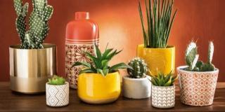 Portavasi per le piante in casa