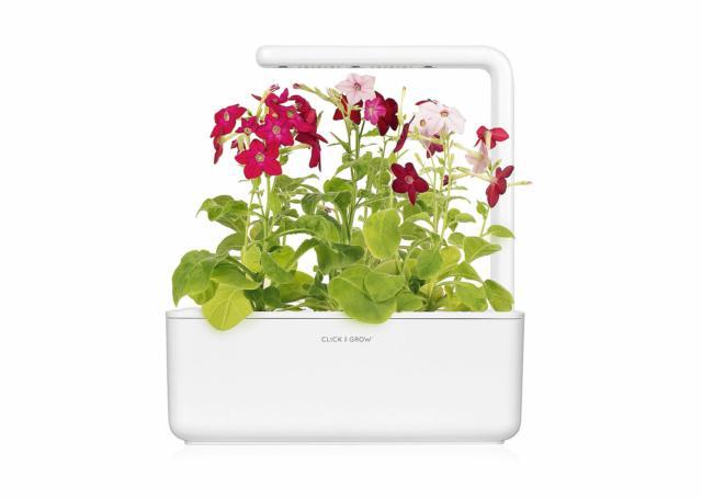 Vasca di crescita piante con luce SMART GARDEN CLICK&GROW MORONI-GOMMA