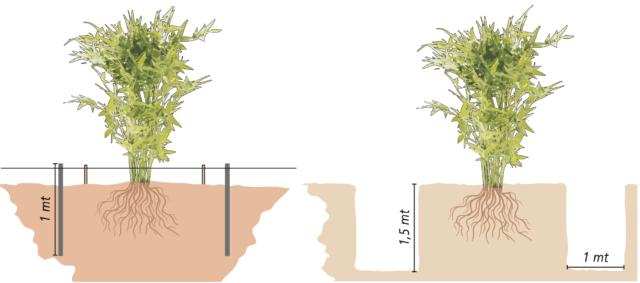 Per riuscire a controllarne lo sviluppo occorrono alcuni accorgimenti preventivi, da eseguire subito al momento della sua messa a dimora:Posizionamento di una sottile lastra di acciaio inox (ma va bene anche in rame) profonda almeno 80 cm, attorno all'area dedicata al bambù: in questo modo viene contrastata l'ulteriore propagazione dei rizomi. Creazione di una trincea attorno all'area che si vuole dedicare al bambù, delimitandola. Questa deve essere profonda almeno 1,5 m e larga 1m. La propagazione dei rizomi viene, in questo modo, contrastata e circoscritta.La prima soluzione è quella più praticata, in quanto esteticamente più valida e sicura. Nel secondo caso, si può anche pensare di piantare il bambù in posizione rialzata, così da ridurre la profondità (e pericolosità) di una trincea.