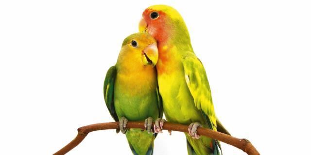Animali in casa: uno o due?