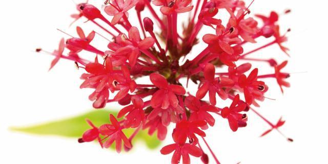 Le piante che resistono a caldo e siccità