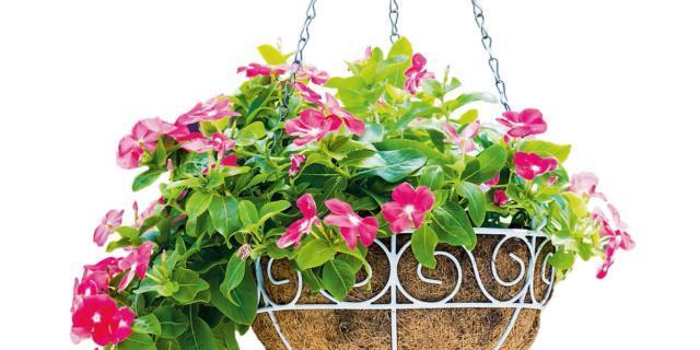 Appendere al soffitto i cestini con le piante ricadenti