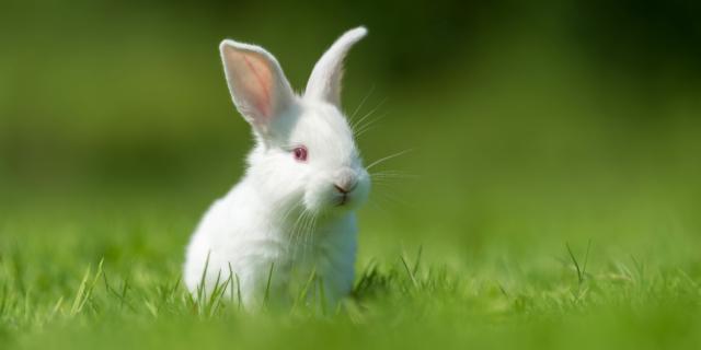 Coniglio all'aperto, in tutta sicurezza
