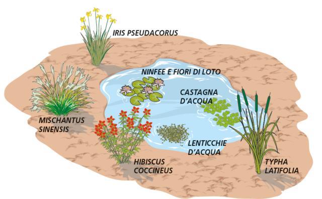 laghetto-piante