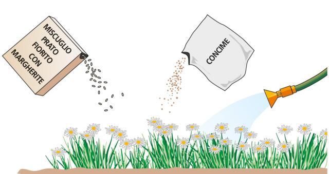Prima di eseguire la semina, è utile eseguire una concimazione di fondo. Si scelga, per questo scopo, un fertilizzante specifico per il prato, di tipo microgranulare, così da arricchire il terreno e aiutare i nuovi semi a trovare un ambiente ricco di nutrienti, così da germinare con più forza e vigore. Prima e dopo la semina, il terreno va bagnato, così da rendere la terra più umida e adatta ad accogliere i semi e ad aiutarli a germinare.