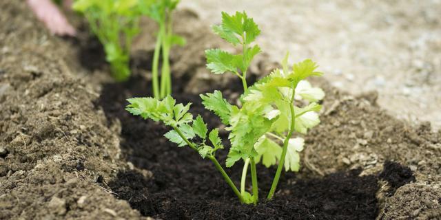 Nell'orto, preparare le aiuole per la semina e i trapianti