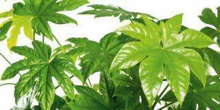 Le piante per gli ambienti umidi come la cucina e il bagno
