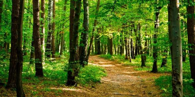 La zecca dei boschi, parassita pericoloso anche per noi