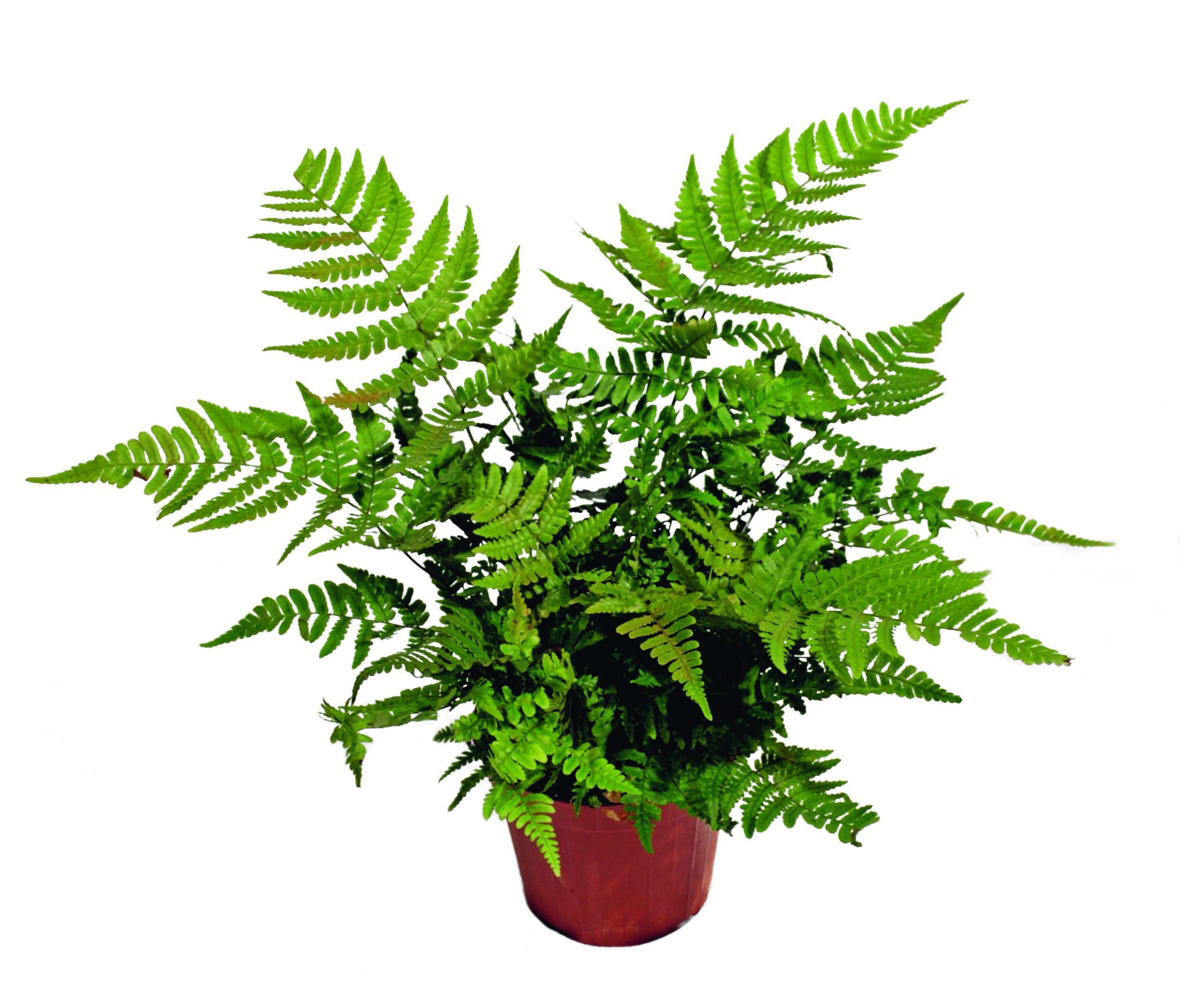 Piante Adatte Al Sole Diretto quali sono le piante adatte al bagno? - cose di casa