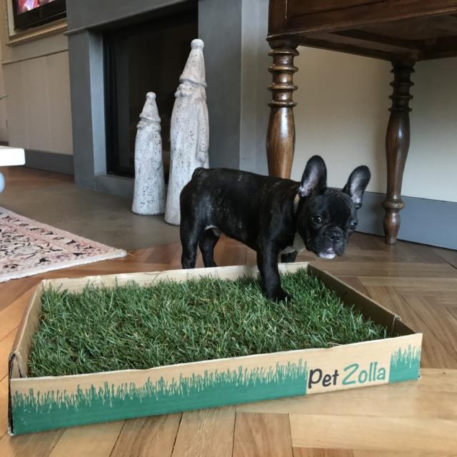 PetZolla Zolla di Erba per Animali Domestici