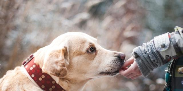 Animali domestici: il benessere degli amici a 4 zampe, anche in vista delle vacanze