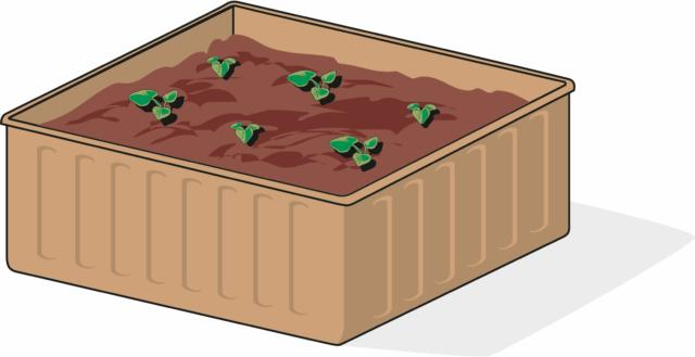 Anche a partire da seme è possibile coltivare il rabarbaro. La semina va eseguita in primavera, in vasetto, su terra morbida mista a sabbia e leggermente umida. In seguito alla germinazione, le plantule vanno diradate e trapiantate in contenitori più grandi, distanziate tra loro circa 15 cm. Le piantine più vigorose, infine, vengono trapiantate singolarmente in vasi più grandi. Con la propagazione per seme, si ottiene una pianta sviluppata in tempi più lunghi, di almeno un anno.