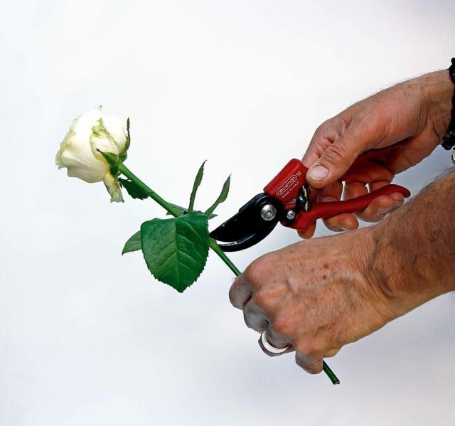 1- Poi private lo stelo dalle foglie, senza strapparle ma recidendole nel punto d'inserzione sul ramo.