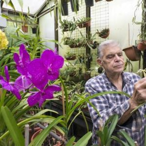 alfrisio di vita nella serra tropicale e orchidee