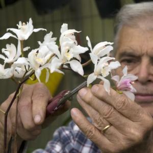 alfrisio di vita 80 anni con una sua orchidea