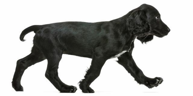 Se il cane perde il pelo … che fare?