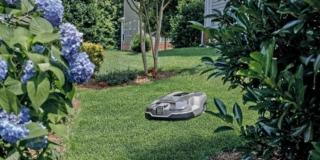 Le cure per il prato durante l'estate: tagliare l'erba e irrigare