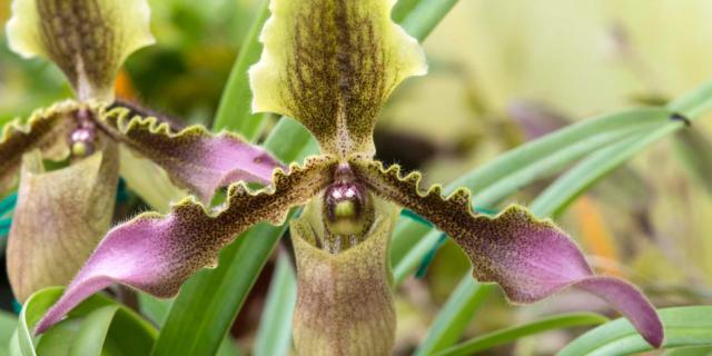 Mille orchidee: un'eredità preziosa che cerca una nuova casa