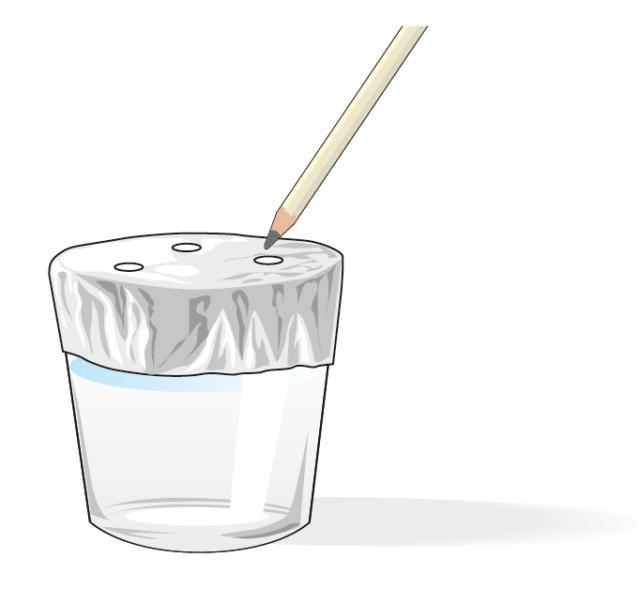 2. Sistemare un foglio di pellicola di alluminio da cucina sopra un bicchiere largo, riempito per metà di acqua. Praticare tre fori sottili con uno stecchino.