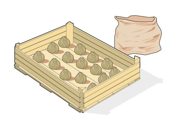 2. Una volta mondati, i bulbi vanno riposti entro una cassetta (di legno o plastica) e lasciati all'esterno ad asciugare. Meglio riporli separati gli uni dagli altri, per facilitarne l'asciugatura. Una volta asciutti, possono essere trattati con un prodotto fungicida, così da prevenire lo sviluppo di marciumi. Infine, si ripongono entro sacchetti di carta (vanno benissimo quelli del pane o del fruttivendolo) e conservati in un luogo fresco e asciutto, per esempio in cantina, fino al momento della messa a dimora autunnale.