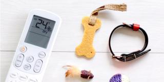 Consigli contro il caldo per il benessere degli animali di casa