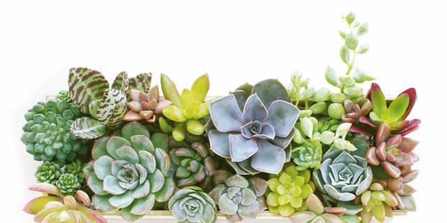 Assicurare acqua alle piante in vaso