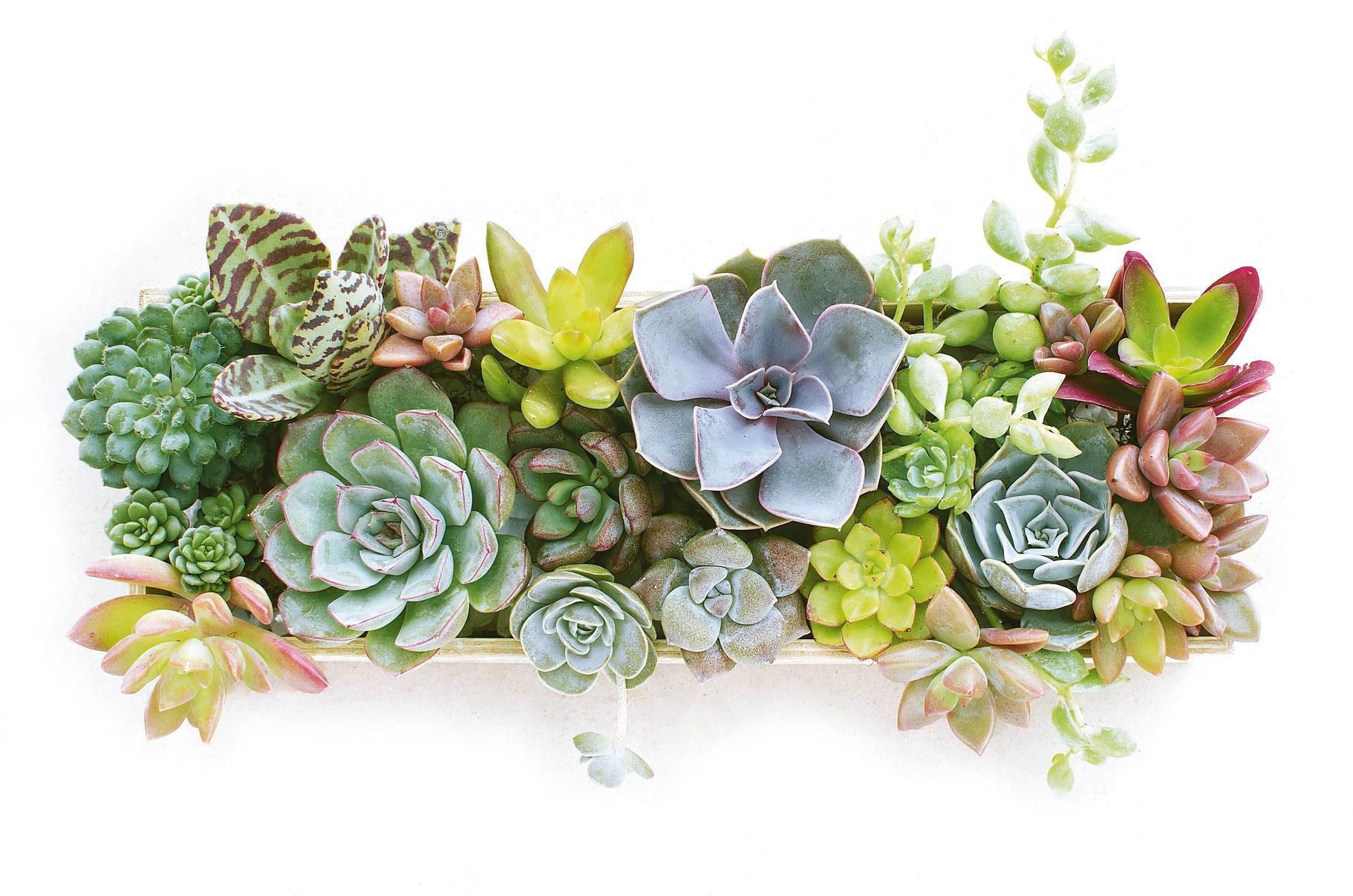 Bagnare Piante Con Bottiglie assicurare acqua alle piante in vaso durante le vacanze