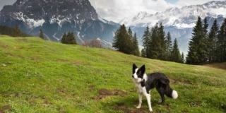 In montagna con il cane, divertimento senza rischi