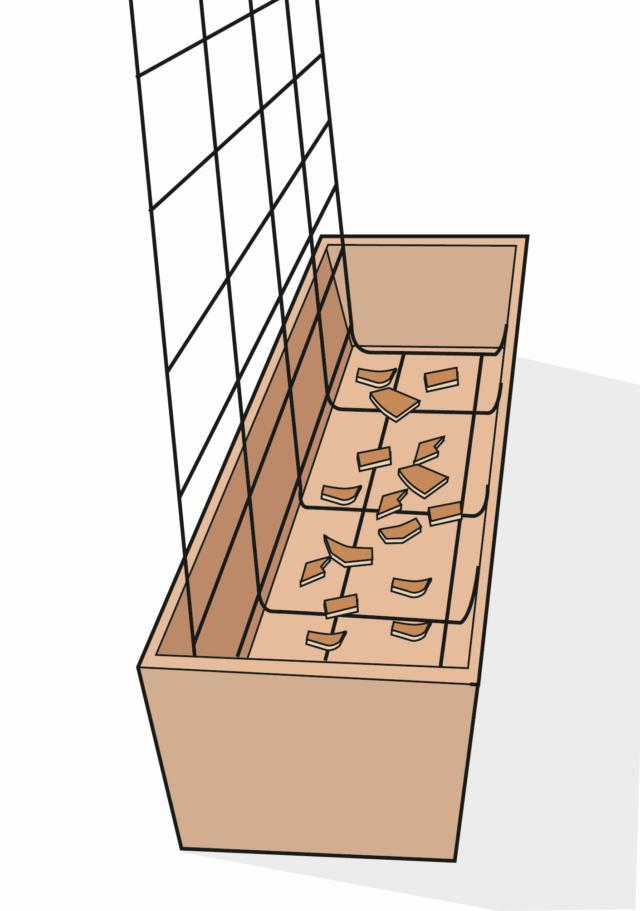 Scegliere una cassetta di terracotta o di plastica lunga 50 cm e accostarla al muro oppure alla ringhiera sul pavimento del terrazzo. Per sostenere i fusti rampicanti, procurarsi una rete lunga 50 cm, con maglie distanti 10 cm, alta quanto la ringhiera da coprire. Piegare la rete a U e posizionarne una parte nella cassetta. Dopo avere sistemato piccoli pezzi di coccio in corrispondenza dei fori di drenaggio, riempire la cassetta con 7-8 cm di argilla espansa e sopra una miscela di terriccio composto da parti uguali di terra da giardino, terriccio universale e sabbia (o altro materiale inerte per favorire il drenaggio). Riempire il vaso fino a due terzi dell'altezza. Quindi, svasare delicatamente le piante acquistate e trapiantarle a una distanza di 15 cm una dall'altra. Aggiungere altro terriccio e pressare la terra attorno al colletto (zona di confine fra l'apparato radicale e il fusto). Lasciare due centimetri fra la superficie del terriccio e il bordo del vaso.