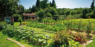 Nell'orto, seminare gli ortaggi autunnali
