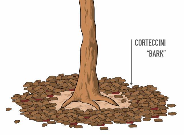 Meglio non distribuire il bark a stretto contatto con il tronco delle piante, poiché si andrebbero a creare condizioni di umidità elevata, con il rischio di favorire lo sviluppo di marciumi a livello del colletto.